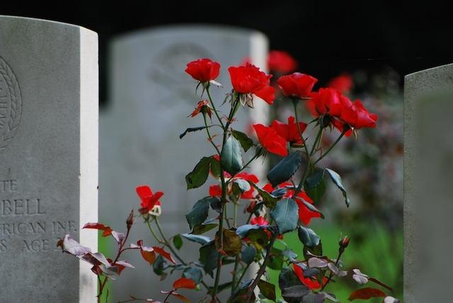 wieńce pogrzebowe Warszawa - Kwiaciarnia ELUSIA