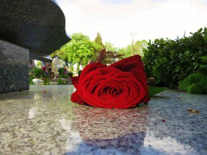 róża na nagrobku
